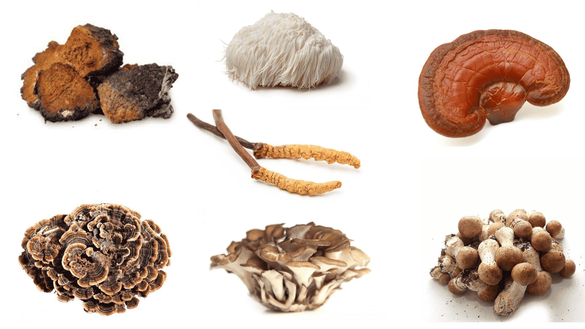 Medicale paddenstoelen