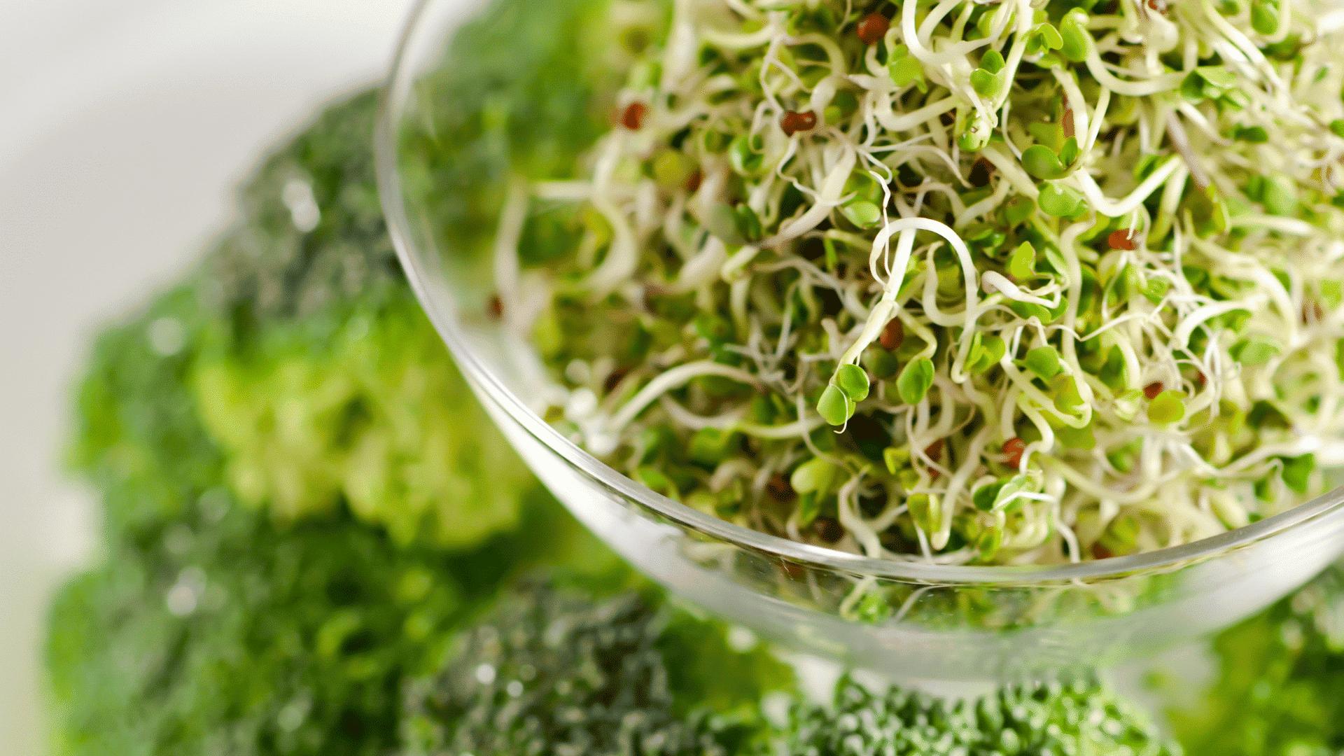 broccoli kiemen