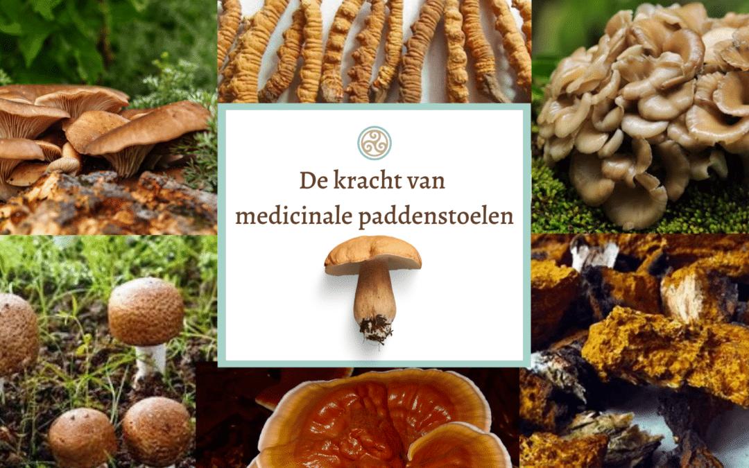 De kracht van medicinale paddenstoelen – ONLINE