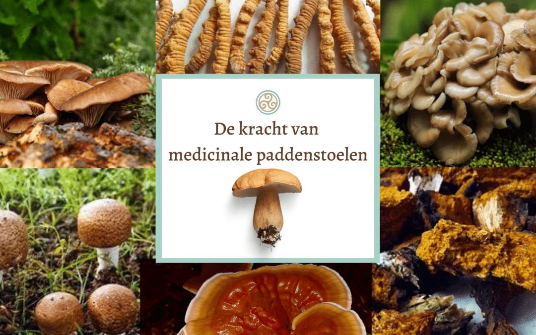 De kracht van medicinale paddenstoelen